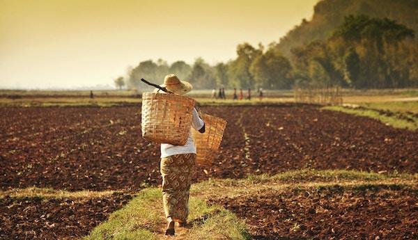 Bondekvinne på en åker i Myanmar