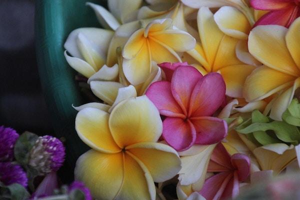 Balis vakre blomsterflora