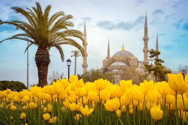 Istanbuls vakre tulipaner