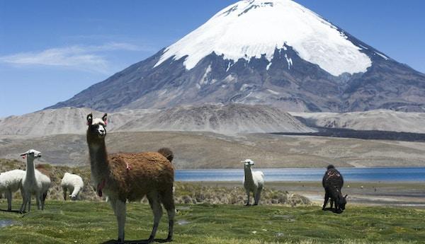 Paranicota- vulkanen i Chile