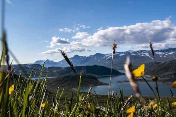 Utsikt mot JOtunheimen med blomster i forgrunnen.