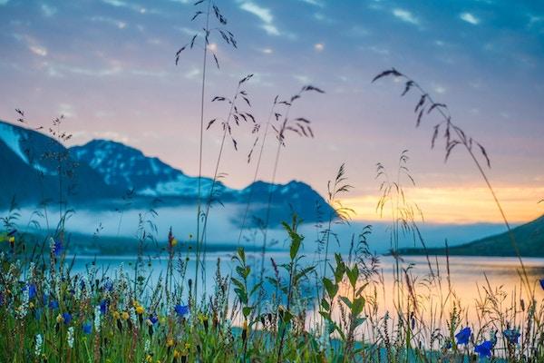 Blomster mot fjell og himmel. Sommerlys
