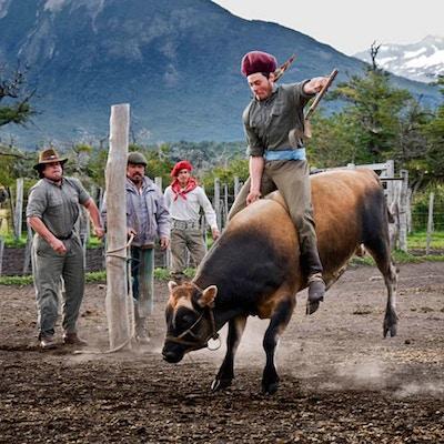 Besøk på patagonsk ranch. gauchos og okseriding