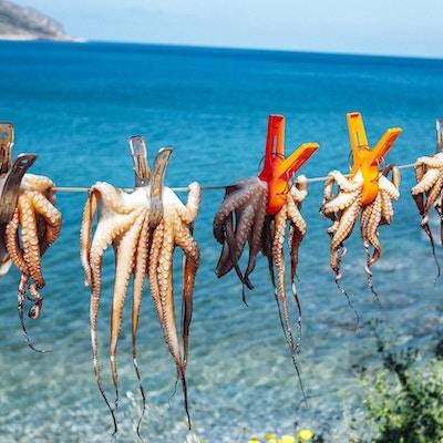 Tørking av blekkspruten i solen ved sjøen.