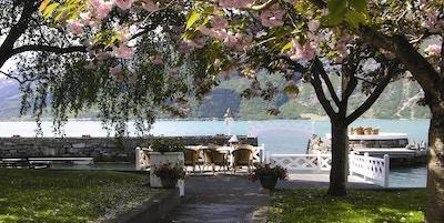 Epleblomster i foran fjord