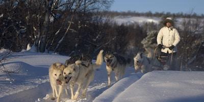 Fem hunder trekker slede med dame i vinterterreng