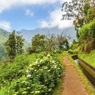 Madeira, vandring langs vanningskanal (Levada)