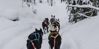 Fem hunder trekker fotografen på en sti i snøen