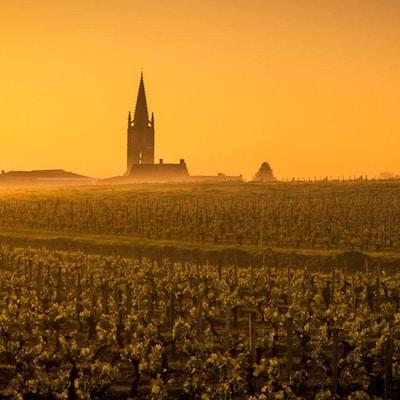 Vinmarker og kirketårn glødende solnedgang.