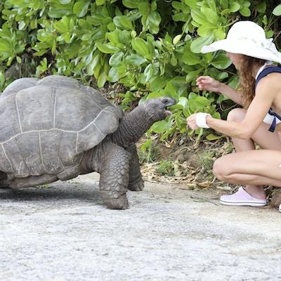 En kvinne som sitter på huk ved en stor skillpadde