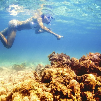 En kvinne som snorkler blant koraller