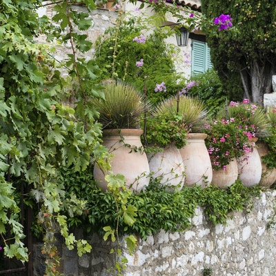 Potteplanter langs veggen