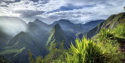 Tropiske daler