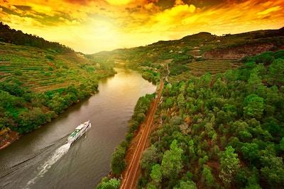 Vingårder i dalen av elven Douro, Portugal