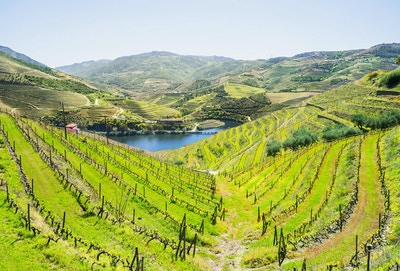 Vingårder og landskap rundt Douro-elven, Portugal