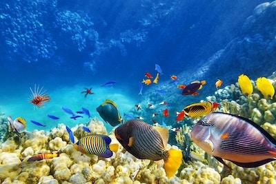 Fargerike, tropiske fisker.
