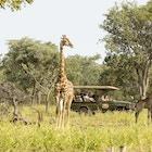 Giraffer Sebatana Lodge