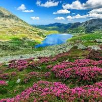 Alpin isbre, høye fjell og fantastiske rosa rhododendron blomster, Retezat nasjonalpark, Karpater, Romania, Europa