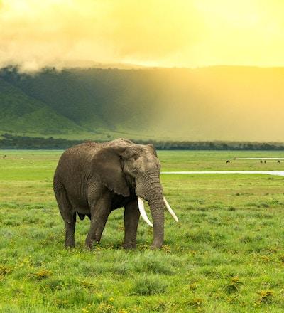 Elefant som passerer med den høye skråningen til ngorongoro-krateret i ryggen og solen som lyser opp scenen