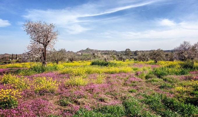 Grønne åser, blomstrende trær og blomster i et vakkert vårlandskap