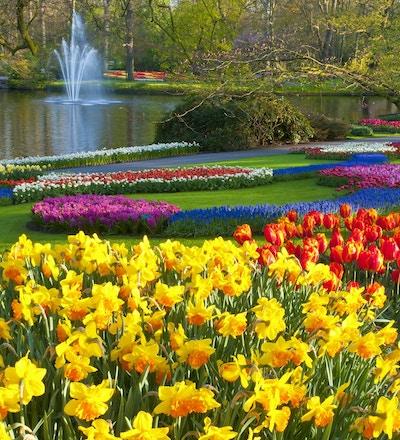 Vakre farger med blomster i alle former