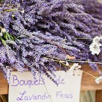 Lavendelbunker som selges i et fransk utendørsmarked. Horisontalt bilden tatt med selektiv fokus