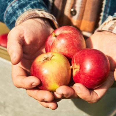 Epler fra Aga Sideri