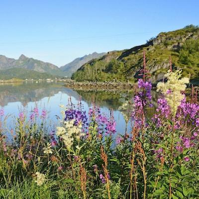 Sommermorgen på Lofoten (Norge)