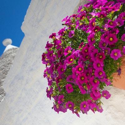 detalj om de typiske Trulli-husene i Alberobello. UNESCOs verdensarvliste.