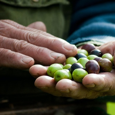 Italia oliven