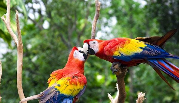 Fugler på Galapagos.