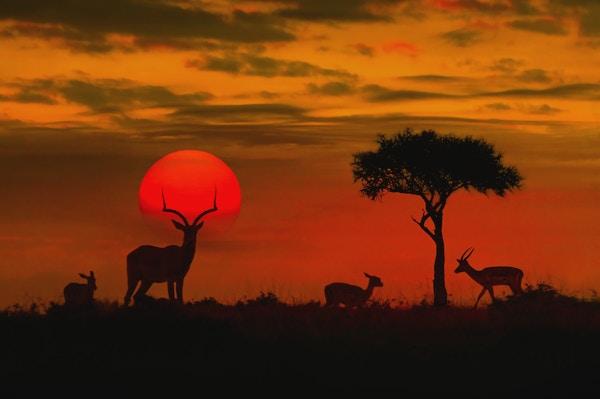 Safari i Kruger-parken, Sør-Afrika.