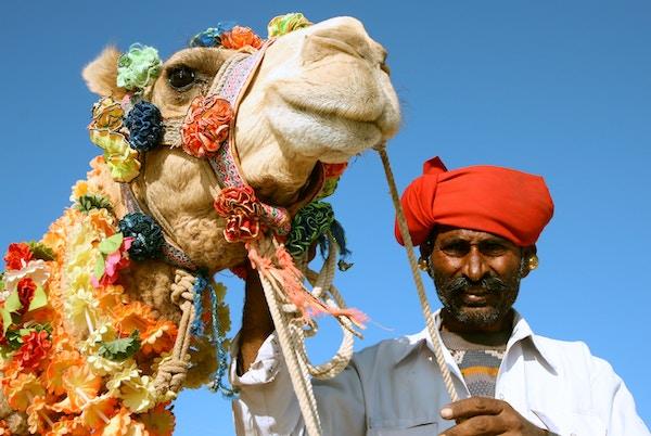 Mann med kamel i India.