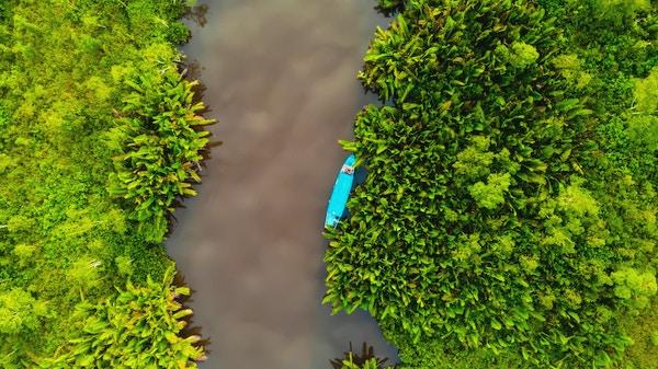 Oversiktsbilde over jungelen på Borneo.