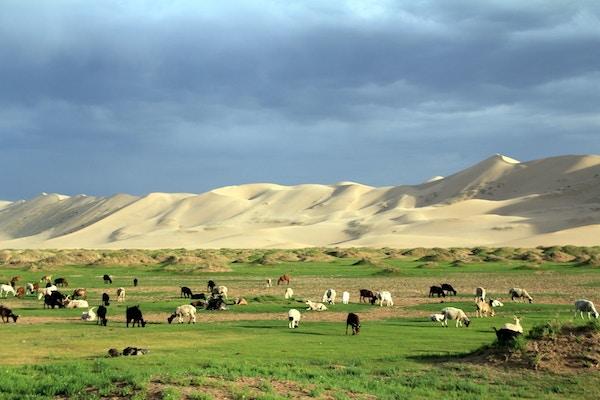 Mongolsk steppelandskap med dyr.