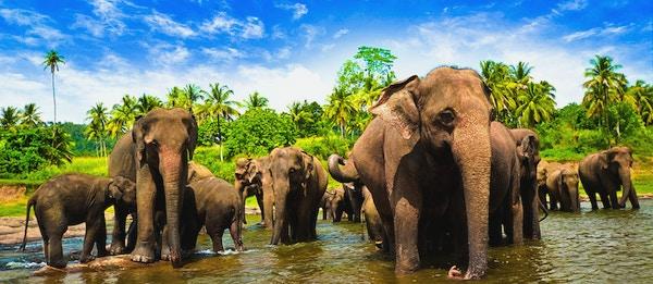 Sri Lanka NY