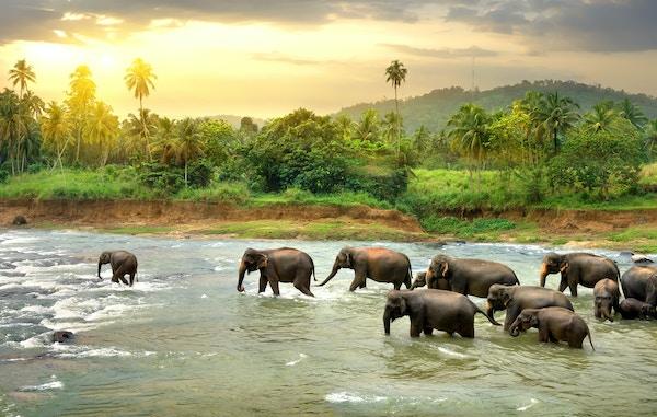 Elefanter på Sri Lanka