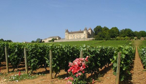 Vingård i Bourgogne, Frankrike.