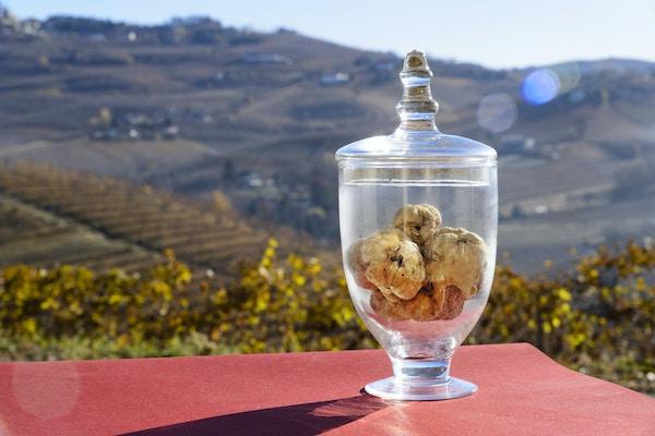 Hvite trøfler i Piemonte.