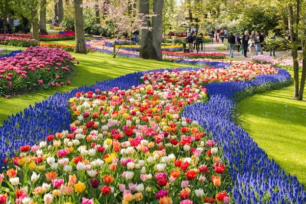 Keukenhof-parken utenfor Amsterdam, Nederlan.