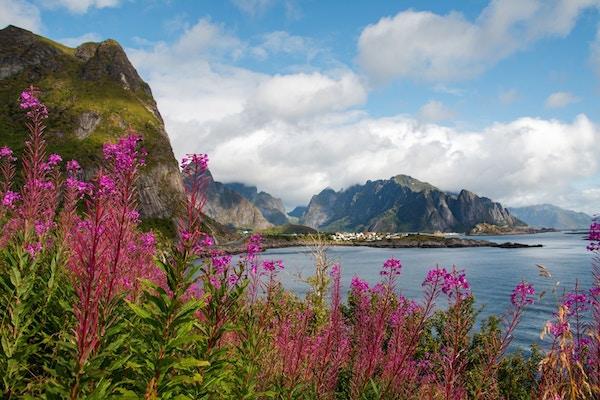 Blomster og fjord i Reine i Lofoten.