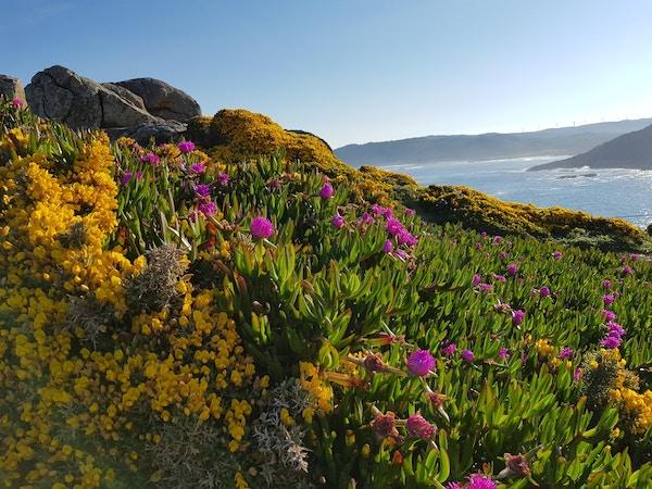 Blomster og havi Finisterre i Nord-Spania.