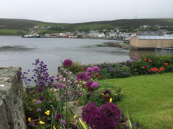 Scalloway, Shetlands tidligere hovedstad. Blomster i forgrunnen.
