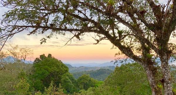 Frodige Secto Cerro Alto på Costa Rica
