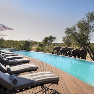 Swimming Pool at and Beyond Ngala Safari Lodge 2