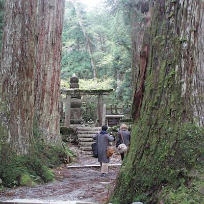 Mt Koya, enorme trær