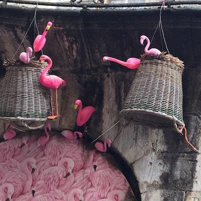 Flamingoer sompynt i Bordeaux