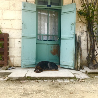 Hund, Chateau Coutet