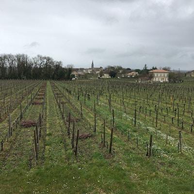 Vinlandskap Bordeaux