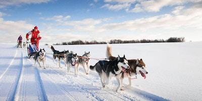 Norge Finnmark hundeslede